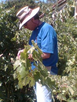 Jeff cutting leaf